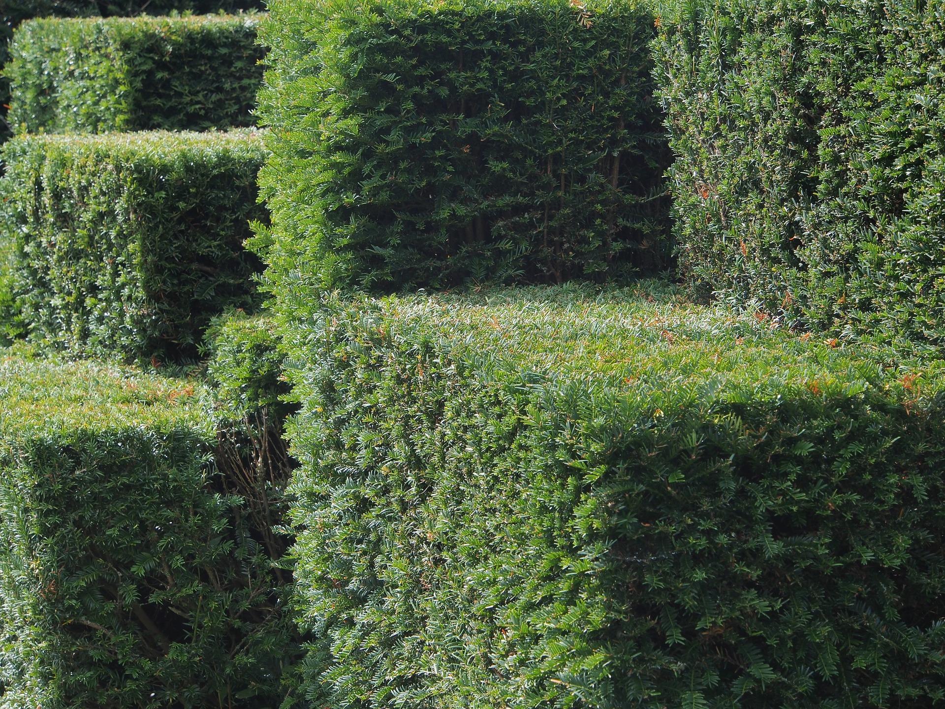 jardingeometrico_izal