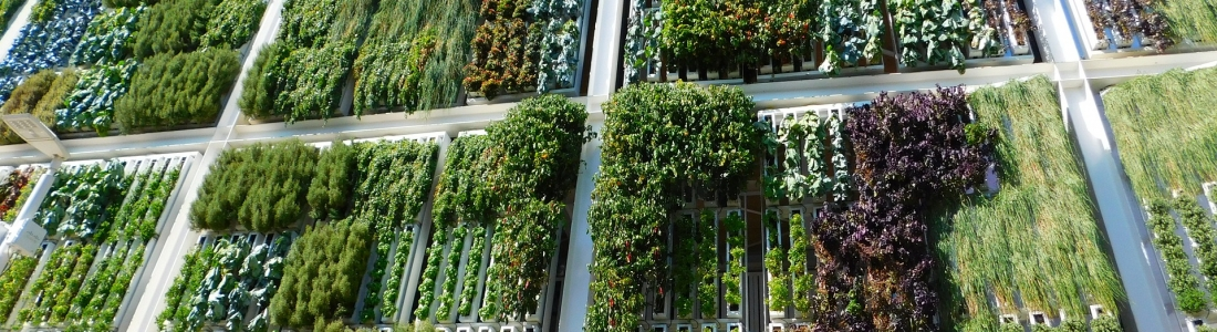 El jardín vertical